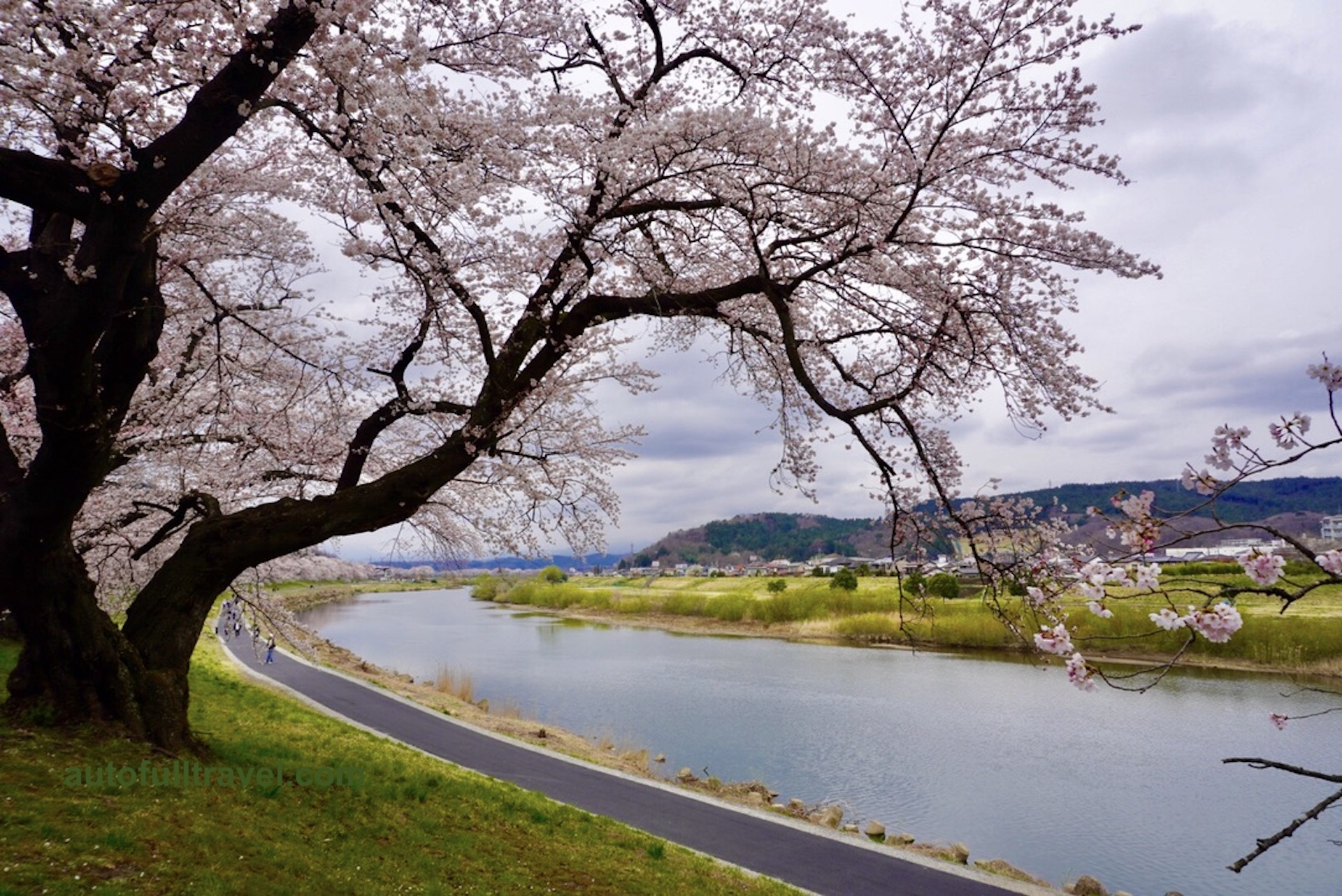 ชมซากุระ Shiroishi Riverside นั่งรถรางกราบไหว้เจ้าแม่กวนอิม ที่เซนได